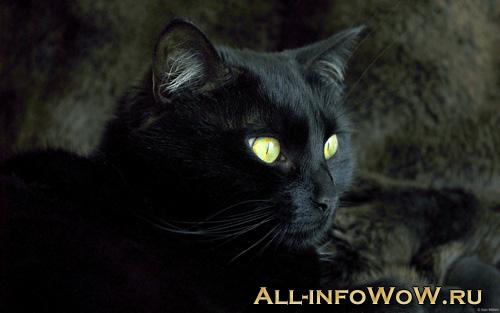 Огненный котенок