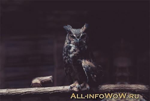 Маунты WoW 3.3.5